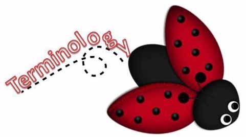 Terminology bug