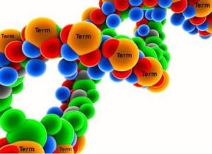 TermDNA